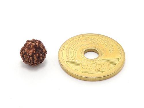 インド菩提樹ルドラクシャ 8ミリ ハンドメイド数珠・手作りアクセサリー用